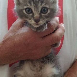 生後1ヶ月半のかわいい子猫😻