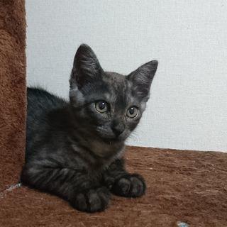 仔猫(3ヶ月未満)の里親様探しています