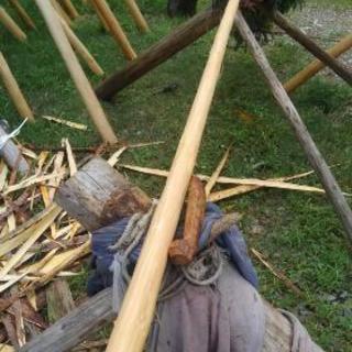 北山台杉小丸太収穫体験