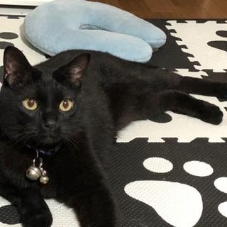 黒猫(推定5歳くらい)