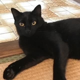 生後一歳 黒猫メス