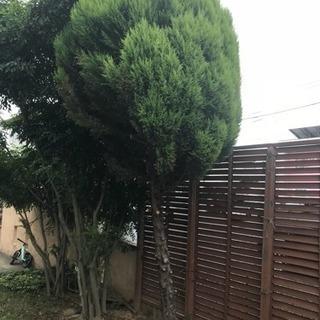庭木の伐採、処分