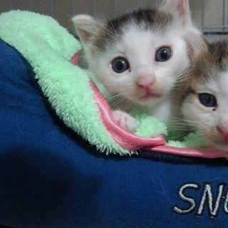 生後3〜4週間の子猫2匹です!