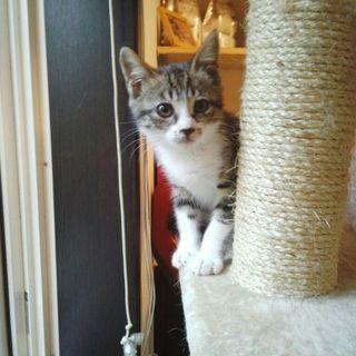 子猫 メス 2-3カ月位