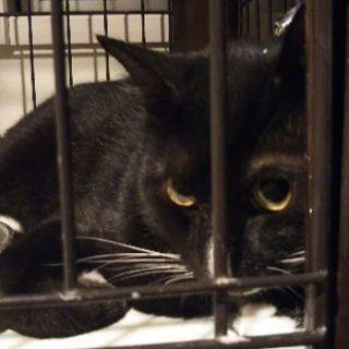 黒白の雄猫