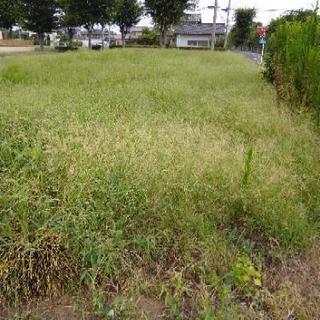 草刈、除草剤散布 樹木の伐採 お任せ下さい!!