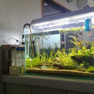 熱帯魚水槽の水草あげます