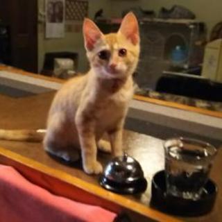 茶とらメス、黒猫オスの里親さん募集 - 猫