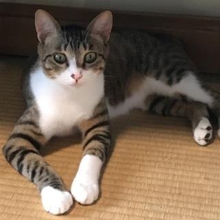 生後一歳半 猫オス