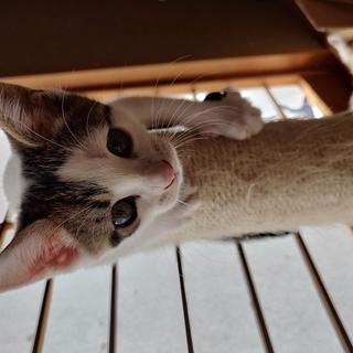 生後2ヶ月になったばかりの子猫あと1匹!
