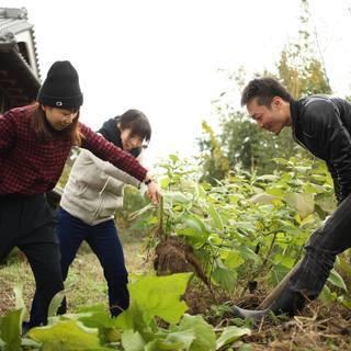 自然農法の体験しませんか?自然農法ワークショップ