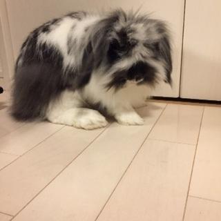 懐っこいウサギです