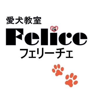 【単発・日払い】 子犬の世話の手伝い、清掃、雑用、簡単な接客