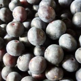 自家製無農薬ブルーベリー1kg~2kg予約販売しています!!