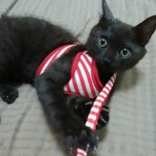 甘えん坊で元気な子猫ちゃん(女の子3ヶ月ぐらい)