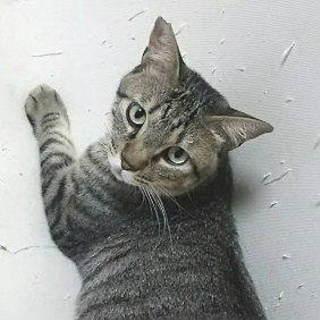 猫と仲良し:キジトラ男子◆そら◆
