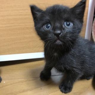 保護猫の赤ちゃん猫です(生後一ヶ月)