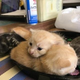 生後1ヶ月の子猫です