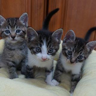 「募集を一時停止します。 」仔猫の写真集から抜け出したよう…