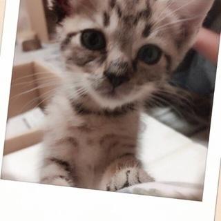 二カ月以内の可愛い子猫の里親さん募集❤️