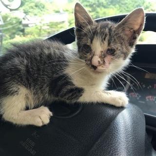 子猫♂1〜2ヶ月