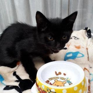 黒い子猫 雄 3ヶ月