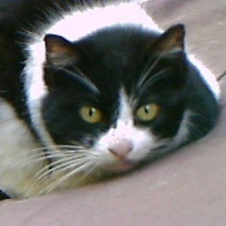 猫の譲渡会で詐欺に遭わない為の勉強会