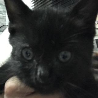 生後1ヶ月半、黒猫オス‼️