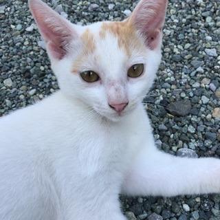 子猫ちゃんの里親さんを募集しております。