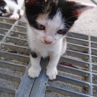 子猫 3匹
