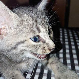 かわいい保護猫の子猫ちゃん