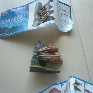 ガチャポン 原色海水魚図鑑 シークレット2種