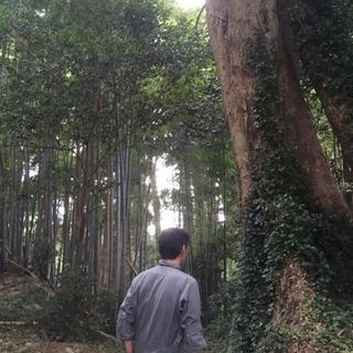 お庭の木、所有の山林、整理いたします。