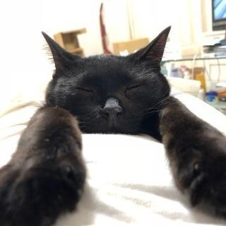 人懐こいエイズキャリアの黒猫ちゃん女の子
