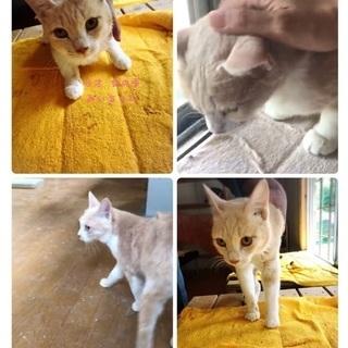 飼い主入院により取り残される親子の猫ちゃん達!家族に迎えてください...
