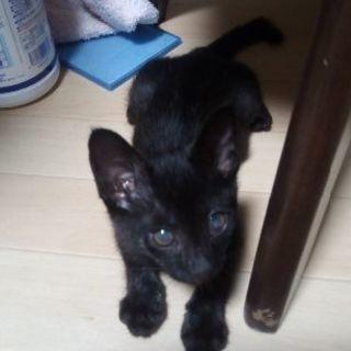 何にでも興味津々!!やんちゃな黒猫の男の子