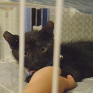 ボンネットで保護の黒猫ちゃん