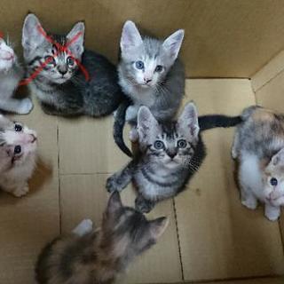 生後3ヶ月の子猫の里親様募集中です。の画像