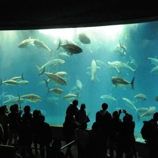 8月19日(日) 涼しい水族館へ!キュートなペンギン達に会いに行こ...