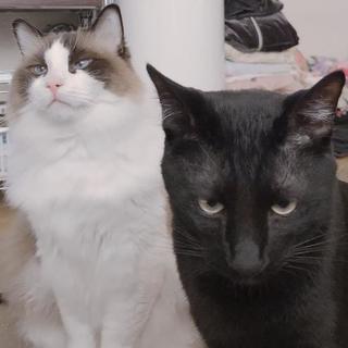 黒猫です。誰か里親さんになって下さい。