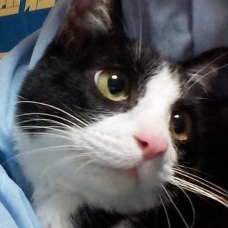 キャットフード&トイレ砂 保護&里親募集中の猫に与える餌とトイレ...