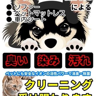 マットレス・ソファーのクリーニング※ペットの粗相も対応 旭川 札幌