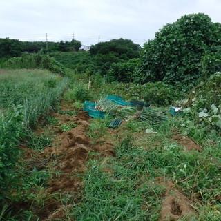 8月18日(土)援農ボランティア募集!神奈川県三浦市
