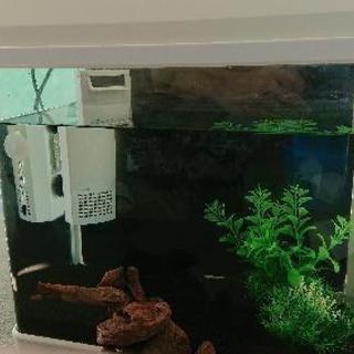 熱帯魚 金魚 飼育 フルセット おまけ多数!暑熱 極冬にも対応可能!