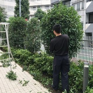 アパートマンション植栽管理 庭木手入れ(所沢市 埼玉県内東京都内)