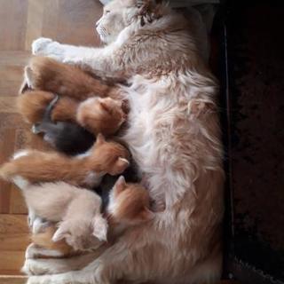 生後1ヶ月の子猫です。