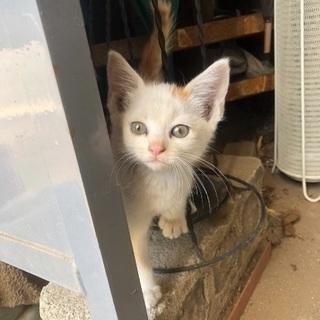 人懐っこい外猫ちゃんの里親募集!