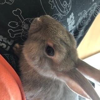 人なつこいウサギの画像