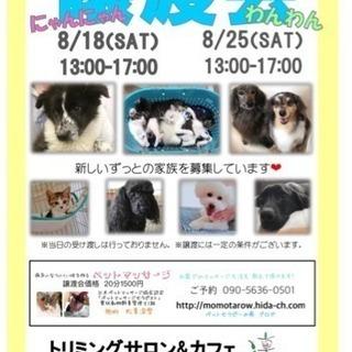 8/18、8/25 岐阜市 わんにゃん譲渡会