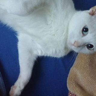 白猫のムース 可愛い女の子なんです!